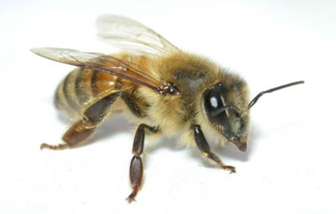 Industrial Lesser Open Bee License